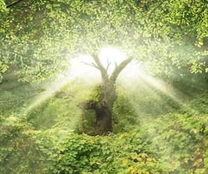 Between Eden and Eternity